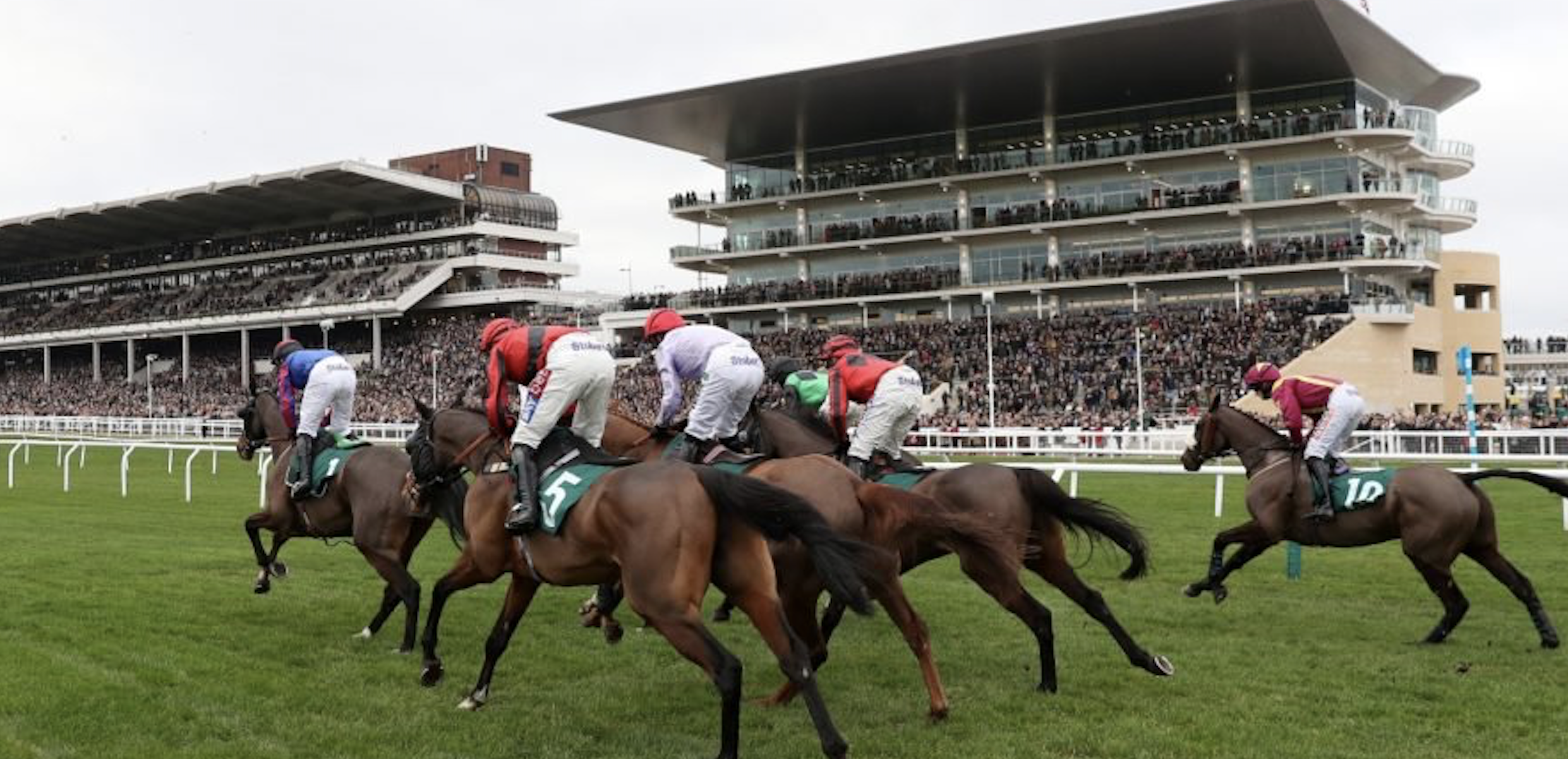 Daily Horse Racing Betting Analysis